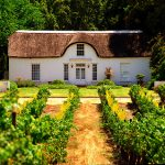 Discover Cape Winelands