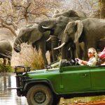 Discover Kruger National Park