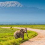 amboseli national park_thumb