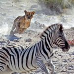 parco nazionale di etosha_thumb