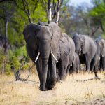 hwange national park_thumb_opt