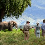 mana pools national park_thumb_opt