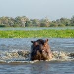 selous game reserve_thumb